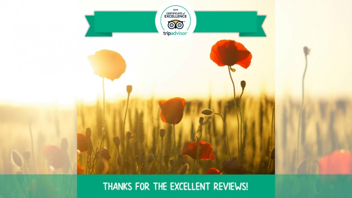 Artemilia awarded with the 2019 Certificate of Excellence by Tripadvisor!